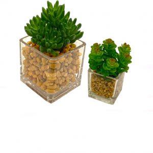 Plantas con Macetas